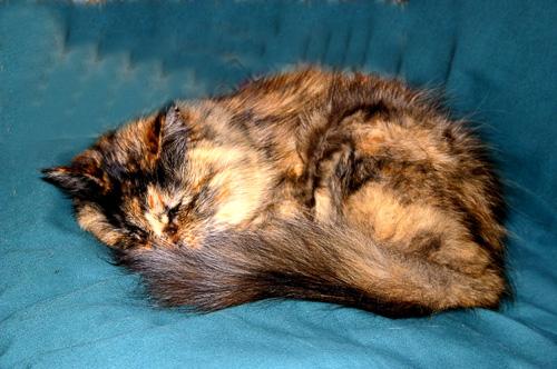 Cat-Sleeping.jpg