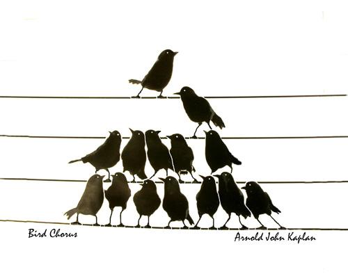 Bird-Chorus--4.jpg