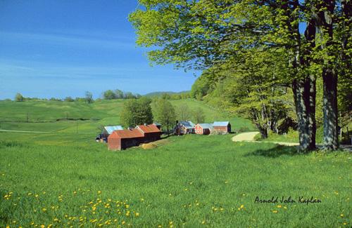Jenne-Farm-at-Summertime.jpg