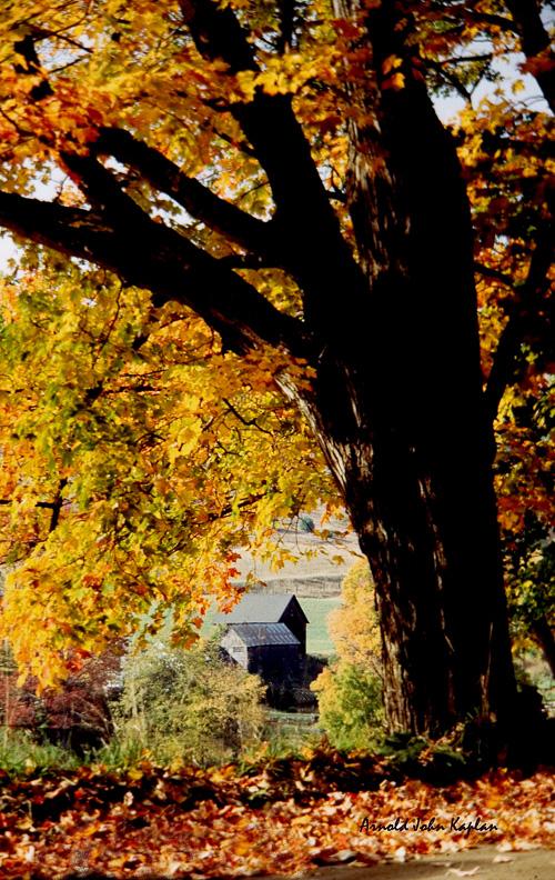 Thru-The-Tree-Gray-Farm.jpg